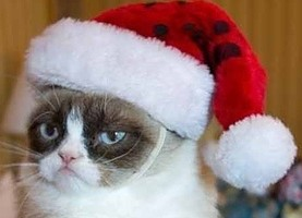 christmas-recycling-cat-pic